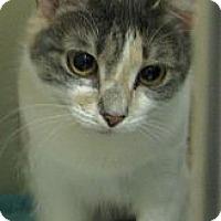 Adopt A Pet :: Lily - Ludington, MI