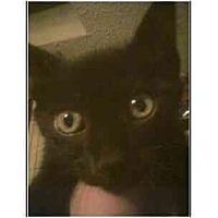 Adopt A Pet :: Licorice(mixed breed) - Owasso, OK