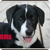 Adopt A Pet :: Jemma - Brazil, IN