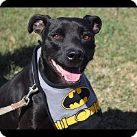 Adopt A Pet :: Mylo - McAllen, TX
