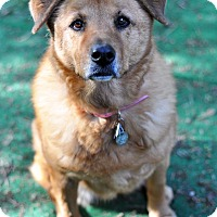 Adopt A Pet :: Sunshine - Newhall, CA