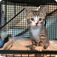 Adopt A Pet :: George - East Brunswick, NJ