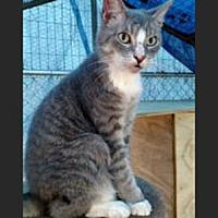 Adopt A Pet :: Simba - Garner, NC