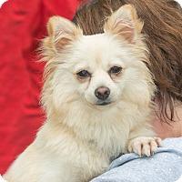 Adopt A Pet :: Sunny - Elmwood Park, NJ