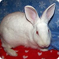 Adopt A Pet :: Willow - Alexandria, VA