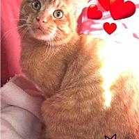 Adopt A Pet :: Lucky - Harrisburg, NC