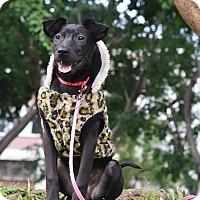 Adopt A Pet :: Selena - Castro Valley, CA