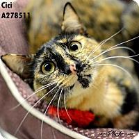 Adopt A Pet :: CICI/CECILIA - Conroe, TX