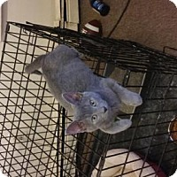 Adopt A Pet :: Smokey - Montclair, NJ