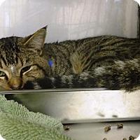 Adopt A Pet :: Felix - Redding, CA
