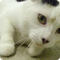 Adopt A Pet :: Inara - Hamburg, NY