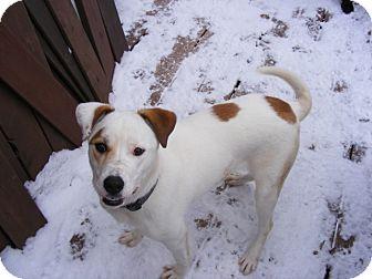 Labrador Retriever/Hound (Unknown Type) Mix Dog for adoption in Rigaud, Quebec - Jackie
