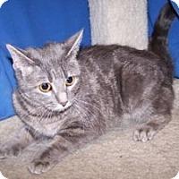 Adopt A Pet :: Pixie - Colorado Springs, CO