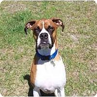 Adopt A Pet :: Aidan - Albany, GA