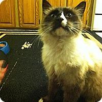 Adopt A Pet :: Castle - Clay, NY