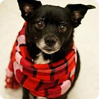 Adopt A Pet :: Sophia - Pocahontas, AR