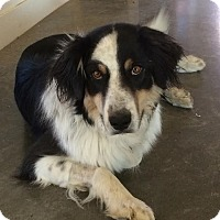 Adopt A Pet :: Skip - Denver, CO