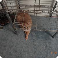 Adopt A Pet :: Rascal - Saint Albans, WV