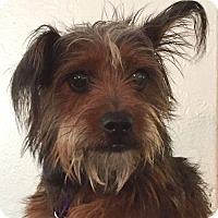 Adopt A Pet :: Coco - Orlando, FL