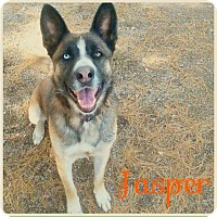 Adopt A Pet :: Jasper - Lagrange, IN