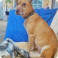 Adopt A Pet :: Mandi - Kingston, TN