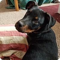 Adopt A Pet :: Reina - Colorado Springs, CO