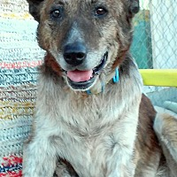 Adopt A Pet :: PJ - sanctuary - Creston, CA