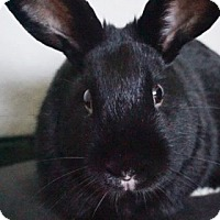 Adopt A Pet :: Sweetpea - Watauga, TX