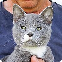 Adopt A Pet :: Duscha - Germantown, MD