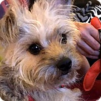 Adopt A Pet :: Dixie Lee - Sinking Spring, PA
