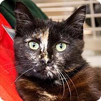 Adopt A Pet :: Catagonia - San Luis Obispo, CA