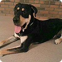 Adopt A Pet :: Bear - Scottsdale, AZ