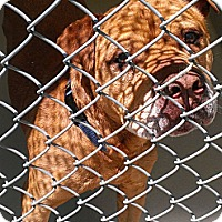Adopt A Pet :: Max - Berlin, CT