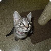 Adopt A Pet :: Khaki - Medina, OH