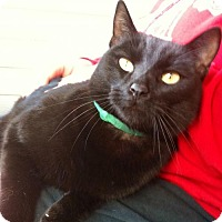 Adopt A Pet :: Binks *Bright-Eyed Buddy* - Decatur, GA