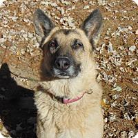 Adopt A Pet :: Karma - Greeneville, TN