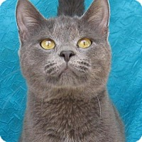 Adopt A Pet :: Chrome - Cuba, NY