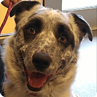 Adopt A Pet :: Ozzy - Midvale, UT