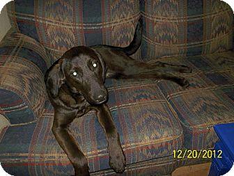 Labrador Retriever/Hound (Unknown Type) Mix Dog for adoption in Leesburg, Virginia - Sadie