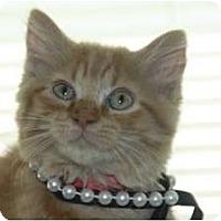 Adopt A Pet :: Carmella (Pearlie Girl) - Arlington, VA