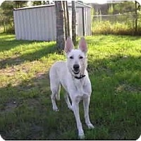 Adopt A Pet :: Roxy - Green Cove Springs, FL