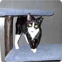Adopt A Pet :: Ignacio - Milwaukee, WI