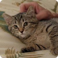 Adopt A Pet :: Missy - Lighthouse Point, FL