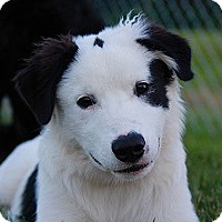 Adopt A Pet :: Guinness - Oliver Springs, TN