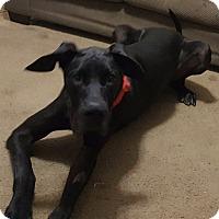 Adopt A Pet :: James Bond - Springfield, IL