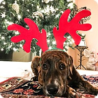 Adopt A Pet :: Jax - Manhasset, NY