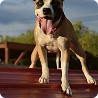 Adopt A Pet :: Sparkle - Peoria, AZ