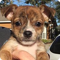 Adopt A Pet :: Carrie#3F - Orlando, FL