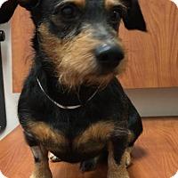 Adopt A Pet :: Duff - Weston, FL