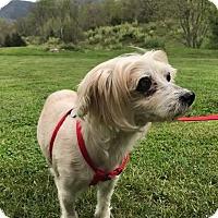 Adopt A Pet :: Flower: Gentle girl! (VA) - Wilmington, MA